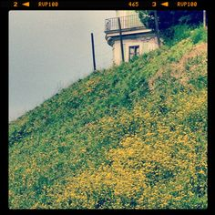Giardino di Boboli #Firenze