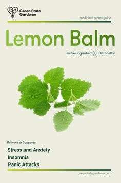 Lemon Balm, Medicinal Value: Calming, antiviral, and antiseptic, this lemony scented member of the mint family is one of nature's best nervous system calmants. As a tea, it acts as a mild yet highly effective sedative and helps alleviate stress, anxiety and insomnia and even panic attacks with accompanying heart palpitations. Also, some find it useful applied topically  for treating herpes; others find it lowers high blood pressure and alleviates migraine headaches. Read more..