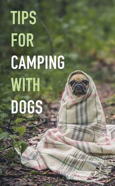 Tips for camping with dogs on your next adventure. Take your pups, hiking, exploring, and camping, just make sure to keep them safe.