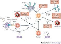 Estrategias de tratamiento para la alergia y el asma