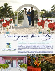 Tower Marketing | Cayman Turtle Farm Creative