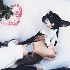 Enjoy 15% off when you order on www.danielwellington.com. Use promo code SHACOCHIS.  There are great bundle deals and free worldwide shipping! (photo via IG: rosebun_)