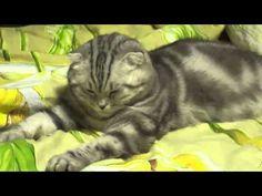 本当に綺麗に寝落ちする「猫」の貴重な映像(6秒後) 2014年11月6日 20:38 feely  /  moss