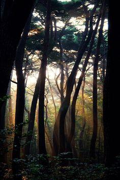 숲속빛 - null