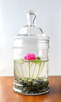 Miniature Pink Lotus Water Lily Terrarium Water Plants you can grow inside Indoor Garden, Indoor Plants, Outdoor Gardens, Indoor Pond, Indoor Flowers, Tiny Flowers, Air Plants, Decoration Plante, Pink Lotus