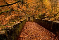 thepreppyyogini:The Hermitage in Autumn (Dunkeld, Scotland) enchantedengland: Oooooh this is super pretty look at the keyhole archway down t...