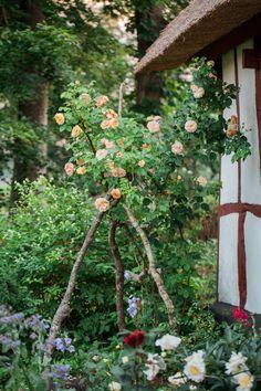 Skånegården Illstorps Östergård är ett paradis med över trehundra rosor omsorgsfullt kombinerade med utvalda perenner