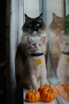 DSC_0211 by *lalalaurie, via Flickr The Itty Bitty Kitty Committee