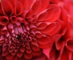 red by dianne