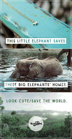 $48 - The world's TINIEST elephant helps elephants BIG time!