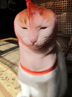 kitty doesn't look happy