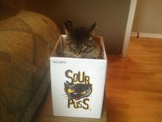 An appropriate box for my cat...