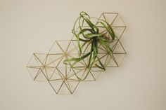 wall Plants Grid - Abstract Wall Grid Modern Minimalist Geometric Hanging Ornament, and Air Plant Holder. Backyard Creations, Air Plants Care, Wallpaper Ceiling, Metal Grid, Diy Sofa, Diy Bottle, Plant Wall, Hanging Ornaments, Wire Art