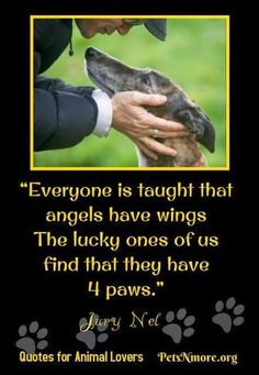 I've got two angels with paws ❤
