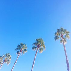 blue skies, palm trees and a whole lot of sunshine