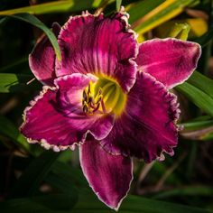 Hemerocallis 'Betty Warren Woods' | Flickr - Photo Sharing!