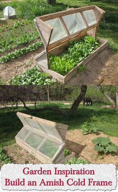 Welcome to living Green & Frugally. We aim to provide all your natural and frugal needs with lots of great tips and advice, Garden Inspiration: Build an Amish Cold Frame