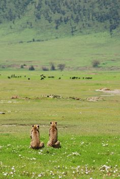 Ngorongoro Crater, Tanzania www.naturescanner...