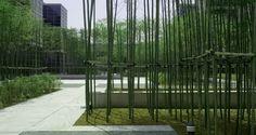 bamboo GARDEN - Google 検索