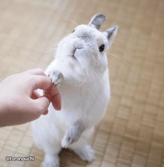 Yes human. You can live in my house but I expect on-time meals treats and unlimited head rubs. Cute Baby Bunnies, Funny Bunnies, Cute Babies, Funny Pets, Cute Little Animals, Cute Funny Animals, Bunny Images, Cute Rabbit Images, Photo Animaliere