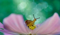 Macro Photography by Milki Asai3
