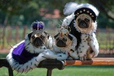Pug royalty.