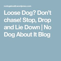 Loose Dog? Don't chase! Stop, Drop and Lie Down | No Dog About It Blog