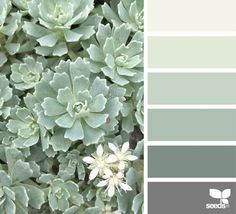 New bedroom paint colors green design seeds ideas Design Seeds, Nature Design, Green Paint Colors, Green Shades Of Paint, Mint Green Paints, Sage Green Paint, Matching Paint Colors, Bedroom Green, Bedroom Neutral