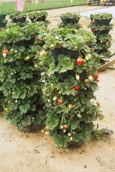 Herbs & Veggies At my Backyard! - Flowers And Gardens
