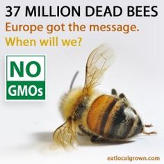 No GMOs - Stop companies like Monsanto from killing off nature and our health!
