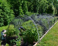 Berry garden Netting over the top to keep out birds Dream Home