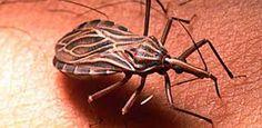 """Conoce un poco mas del llamado """"Mal de Chagas"""""""