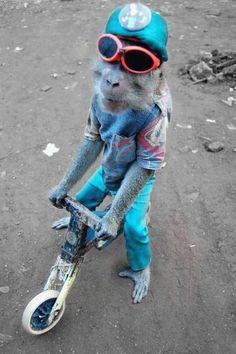 monkey in clothes funny photos | Page 3/23 from Funny Pictures 64 (Monkey On A Bike) Posted 6/21 ...