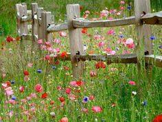 wildflower meadow - the fence and flowers remind me of my childhood