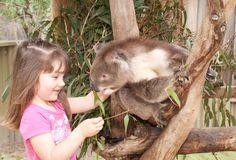 Maru Koala and Animal Park   Phillip Island