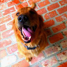 Puppy smile :)