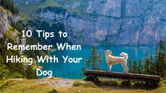"Show Your Dog How It's Done With These Great Training Tips! Photo by Alex Beattie A better name for the art of training your dog would be ""human training"". All Dogs, Dogs And Puppies, Corgi Puppies, Pet Puppy, Easiest Dogs To Train, Seen, Dog Training Tips, Training Kit, Training Classes"