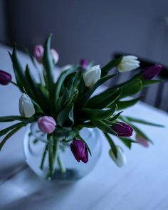 Tulips    @hetkiamaalla