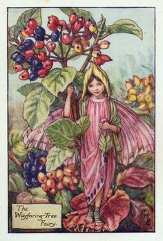 """Vintage print 'The Wayfaring-Tree Fairy' by Cicely Mary Barker from """"The Book of the Flower Fairies""""; Poem and Pictures by Cicely Mary Barker, Published by Blackie & Son Limited, London [Flower Fairies - Autumn] Cicely Mary Barker, Fairy Land, Fairy Tales, Flower Fairies Books, Kobold, Autumn Fairy, Vintage Fairies, Beautiful Fairies, Fantasy Illustration"""