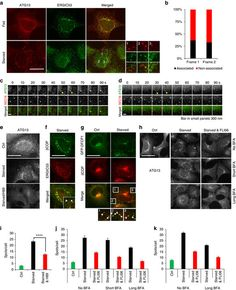 nature communications: Autophagy initiation by ULK complex assembly on ER...