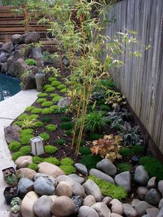 Small Aphonse Karr bamboo in Japanese style garden