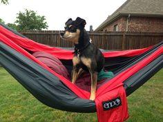 Hammock Stand #summer #yard #camping #outdoor