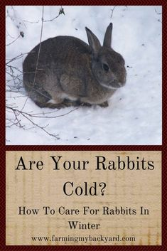 Are your rabbits cold? Caring for rabbits in winter is pretty easy but they do need a little extra care and attention to stay comfortable. Tortoise As Pets, Tortoise Food, Tortoise Cage, Meat Rabbits, Raising Rabbits, Red Eared Slider, Feline Leukemia, Bunny Care, Rabbit Hutches