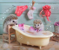 Cute Hedgehogs
