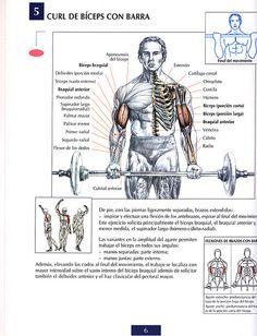 Ejercicios Bíceps: Curl de bíceps con barra by raul391970, via Flickr