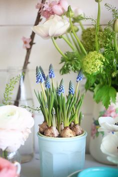 Springtime bulbs in a pot! #FADSSpringRestyle