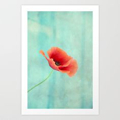 Buy pavot I by Claudia Drossert as a high quality Art Print. Worldwide shipping available at Society6.com. Just one of millions of products available.