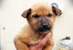 Una tarde recibimos la llamada de un empresa de Xàtiva, habían abandonado a estas 6 preciosidades... - Perros en adopción - Gatos en adopción