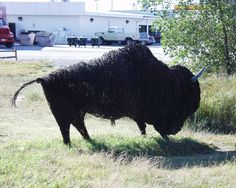 Large buffalo made completely of barbed wire in Gothenburg, Nebraska