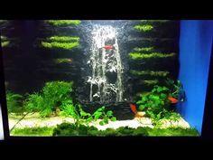 Adorable Alternatives To Fish Aquaponic 14 Adorable Alternatives to Fish Aquaponic Beautiful Pin by Maria Joy On Fish Tanks